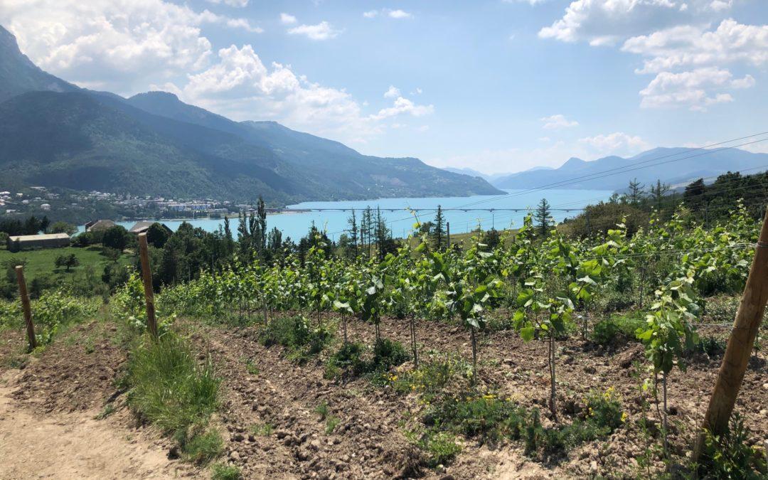 Excursion : à la découverte des vignobles haut-alpins